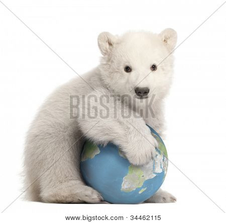 Polar bear cub, Ursus maritimus, 3 months old, with globe sitting against white background