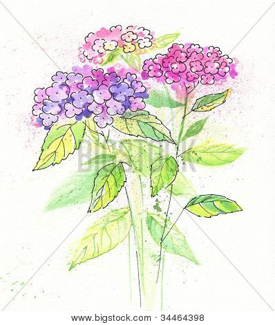Painted watercolor hydrangea flowers