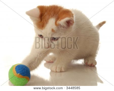 White And Orange Kitten With Ball