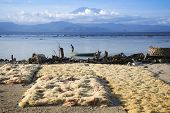 pic of gunung  - seaweed farmed along the coast of nusa lembingan opposite gunung agung volcano in bali indonesia - JPG