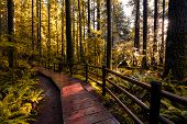 Autumn Color Processed. Lynn Canyon Park, North Vancouver, British Columbia, Canada. Beautiful Woode poster