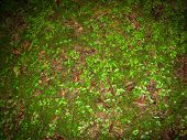Mosses And Buds Of The Tree In The Forest Floor. Forest Floor. Close Up Of  Jungle Floor. poster