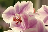Orchids Growing Tips. How Take Care Tropic Plants Indoors. Gardening And Planting. House Plants. Orc poster