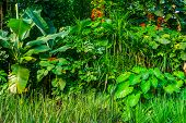 Diverse Plant Species In A Tropical Garden, Wild Exotic Vegetation, Nature Background poster