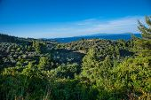 Beautiful panoramic view on Olive groves on north Evia island.  Greece. Europa. poster