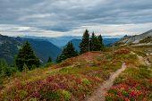 Trail Winds Through Tatoosh Range  In Washington Wilderness poster