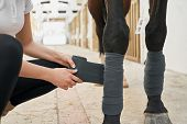 Close Up Of Horses Legs Protected From Injuries With Bandages That Carefully Putting Beautiful Young poster