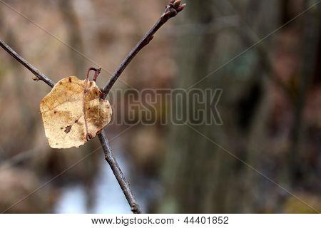 Last fall leaf on bare tree branch