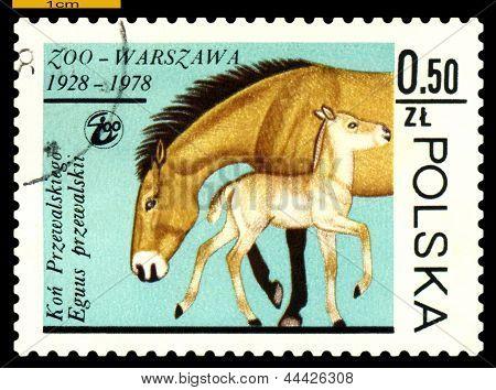Vintage  Postage Stamp. Przewalski Mare And Colt.