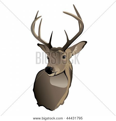 Trofeo Whitetail Deer Buck