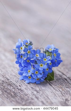 Forgetmenot flores