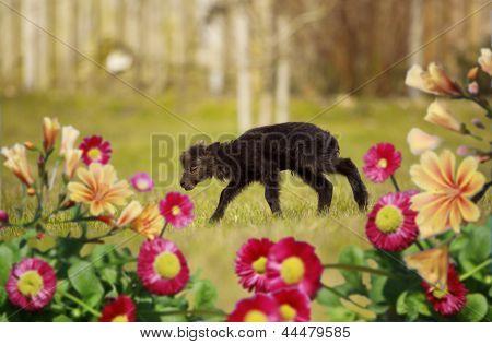 little lamb tries to run