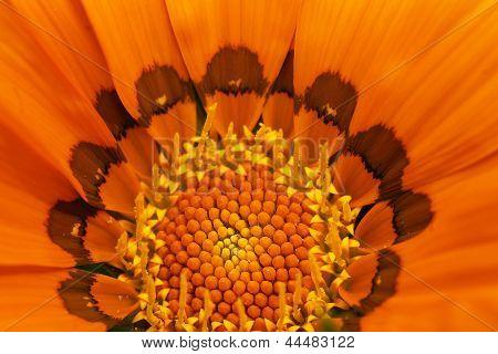 Inside Orange Flower