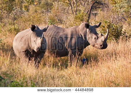 Rhino Standing In Nature