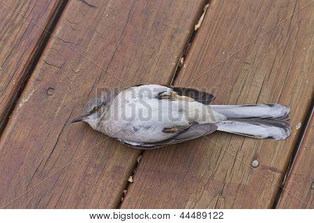 Pájaro aturdido