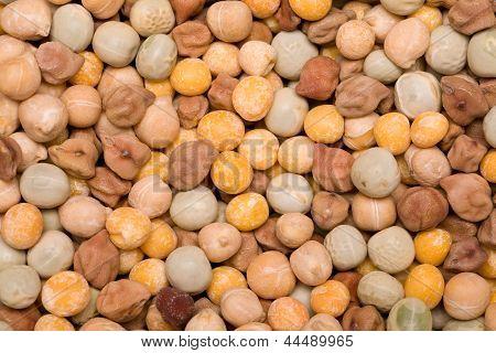 Grain Beans