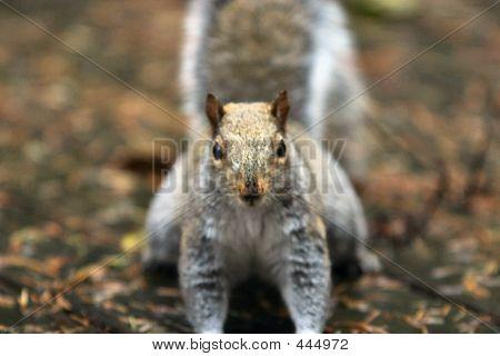 Squirrel Head On