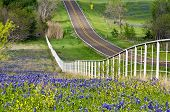 picture of bluebonnets  - Bluebonnets and yellow wildflowers along the side of the rolling road with white fence in Texas - JPG