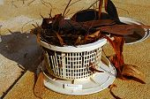 Pool skimmer basket full of leaves.