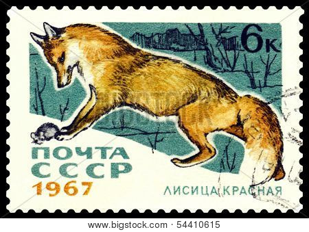 Vintage  Postage Stamp.  Red Fox.