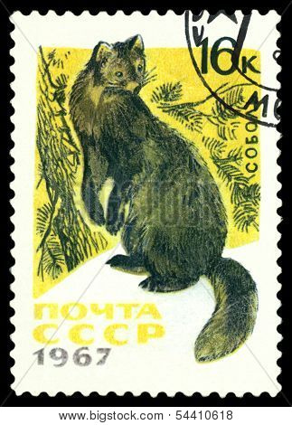 Vintage  Postage Stamp.  Sable.