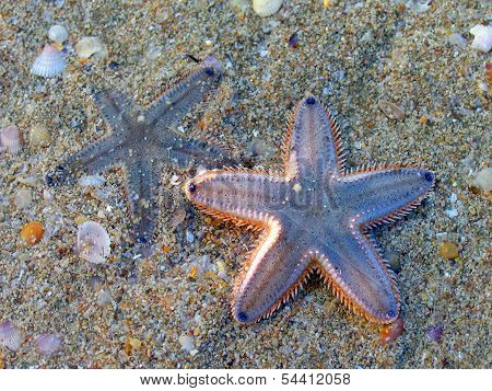 Two Starfish On A Sandy Beach