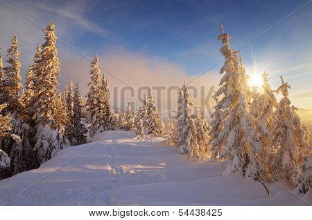 Winter landscape with pine forest in a mountain valley. The warm rays of the setting sun on cold snow