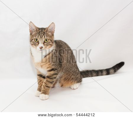 Tabby Cat With Yellow Eyes