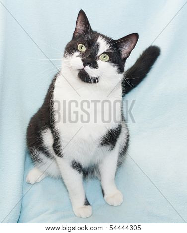 Black And White Cat With Green Eyes Sitting