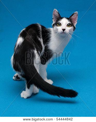 Skinny Black And White Kitten Standing
