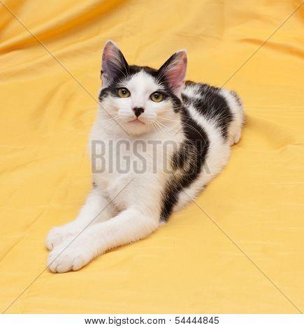 Skinny Black And White Kitten Lying