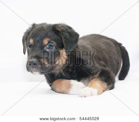Black Puppy With Red Spots And White Legs
