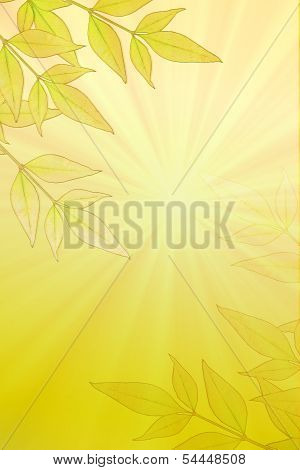Leaves On Sunburst