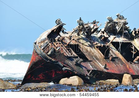 Shipwreck with birds sitting on wreck