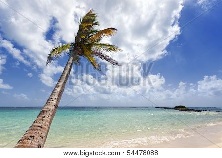 Single palm tree on tropical beach at Guadeloupe