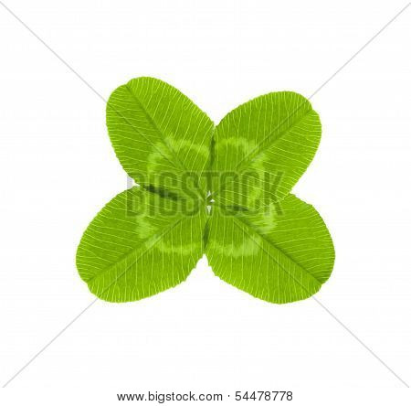 four-leaf clover for good luck isolated on white