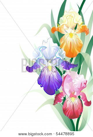 Vector holidays card with Iris flowers bouquet
