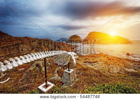 whale bone in Cape D'Aguilar Peninsula, landmark in hongkong Shek O Hok Tsui