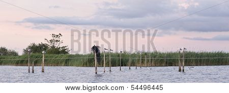 Seagulls resting on the posts at the Lake in FRIESLAND in the NETHERLANDS