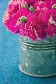 stock photo of carnation  - Fuchsia color carnation flowers in a metal can on demin blue background - JPG