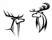 image of antlers  - Wild deers with big antlers for mascot tatttoo or hunting design - JPG