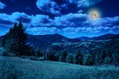 picture of coniferous forest  - meadow near coniferous forest in mountains at night - JPG
