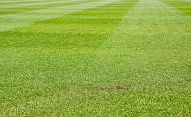 stock photo of fescue  - Fresh Cut green grass on a new baseball field - JPG
