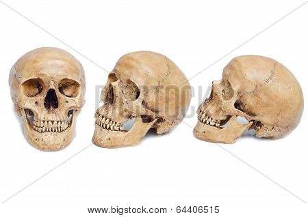 Skulls Isolated On White Background