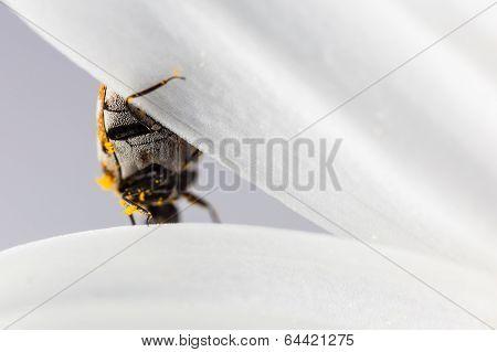 Bug On Petal