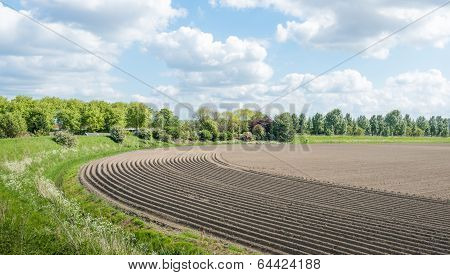 Curved Ridges With Newly Seeded Potatoes