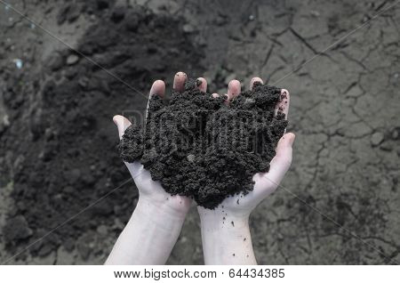 Soil In The Open Palm