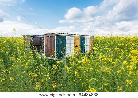 Beehives in the field of rapeseed