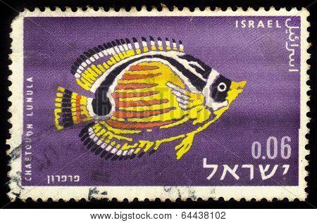 Raccoon Butterflyfish, Chaetodon Lunula