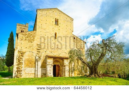 Sant Antimo Montalcino Church And Olive Tree. Orcia, Tuscany, Italy